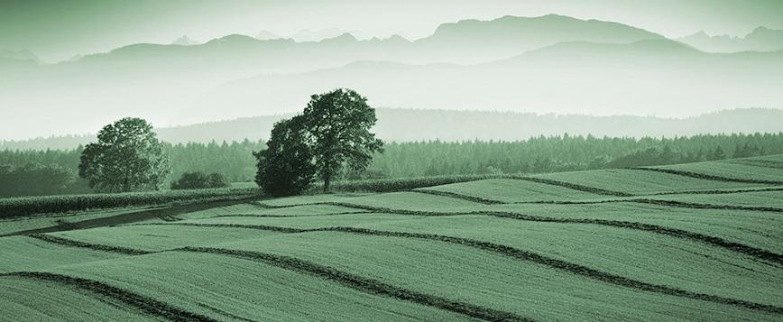 1310 Spirits Landschaft